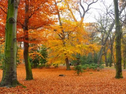 Autumn Park Garden