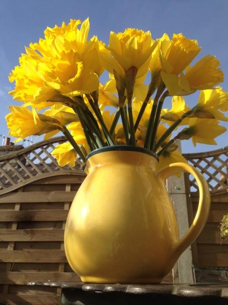 Spring Daffodils 1