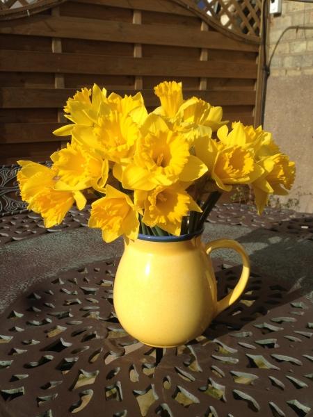 Spring Daffodils 2